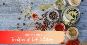Tradition of herb collecting, ecology, click for Serbia