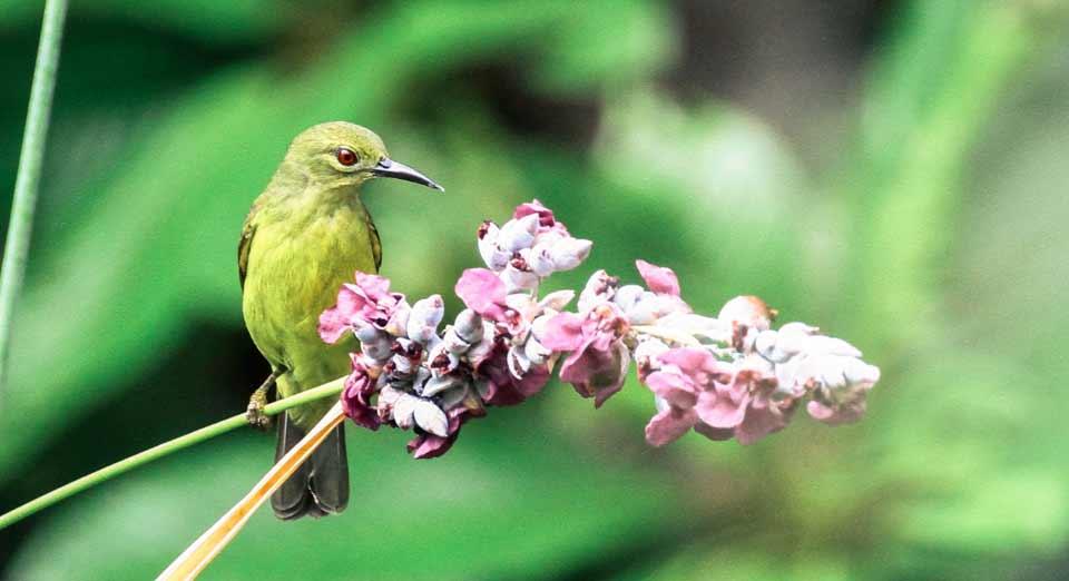 Ecology, nectar foundation