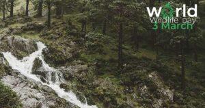 World Wild Day 2021