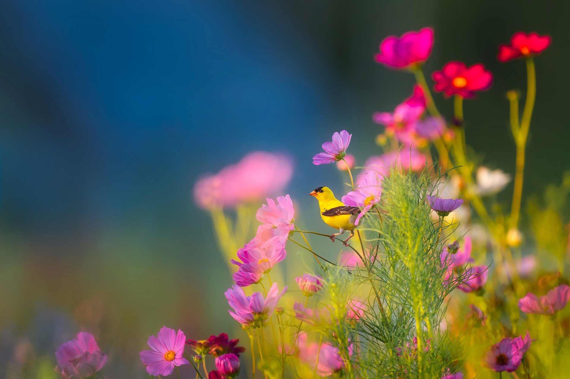 International Day for Biological Diversity - flowers